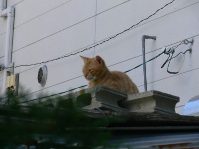 お見送り猫