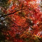 みどり湖の紅葉が見頃