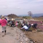芝桜の丘で苗植え作業