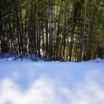 雪原と節分