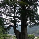 レッツ豊根村with教授