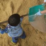 籾殻山に埋もれる息子