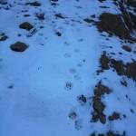山の中で足跡