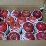 リンゴだーーーー!