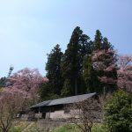 ようやく、春の訪れを感じる景色に