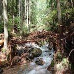台風21号による流木ダム形成