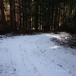 山の中に現れた白銀の舗装路面