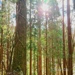 大きな木が神社の境内に