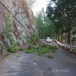 日が暮れる直前に道路倒木発生