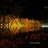 茶臼山高原紅葉ライトアップ