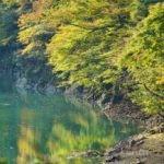 とよね・みどり湖ハーフマラソン大会2019→東栄町で花祭りのパネラー