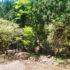 新緑あふれる沢沿いハイキング